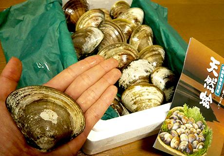 筑前海加布里産天然蛤