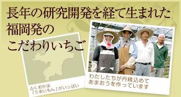 長年の研究開発を経て生まれた、福岡発のこだわりいちご