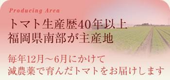 トマト生産歴40年以上、福岡県南部が主産地。毎年12月~6月にかけて減農薬ではぐくんだトマトをお届けします。