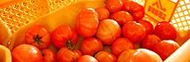福岡トマト